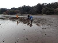 波で運ばれた小石が目立つ干潟面.JPG